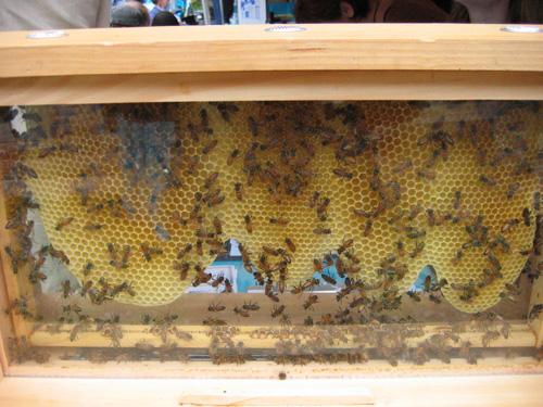 bees-6-6-09.jpg